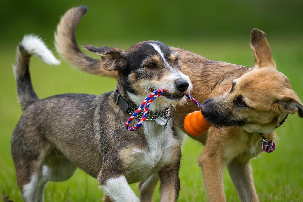 Toys For Dogs That Are Rough On Toys
