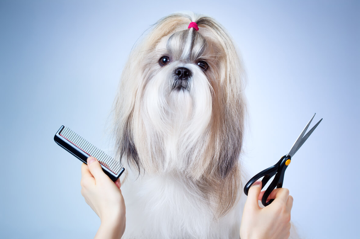dog groomers newmarket ontario
