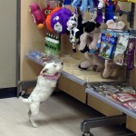 Ruby is picking out her favorite toy from the Wag Awhile shelves