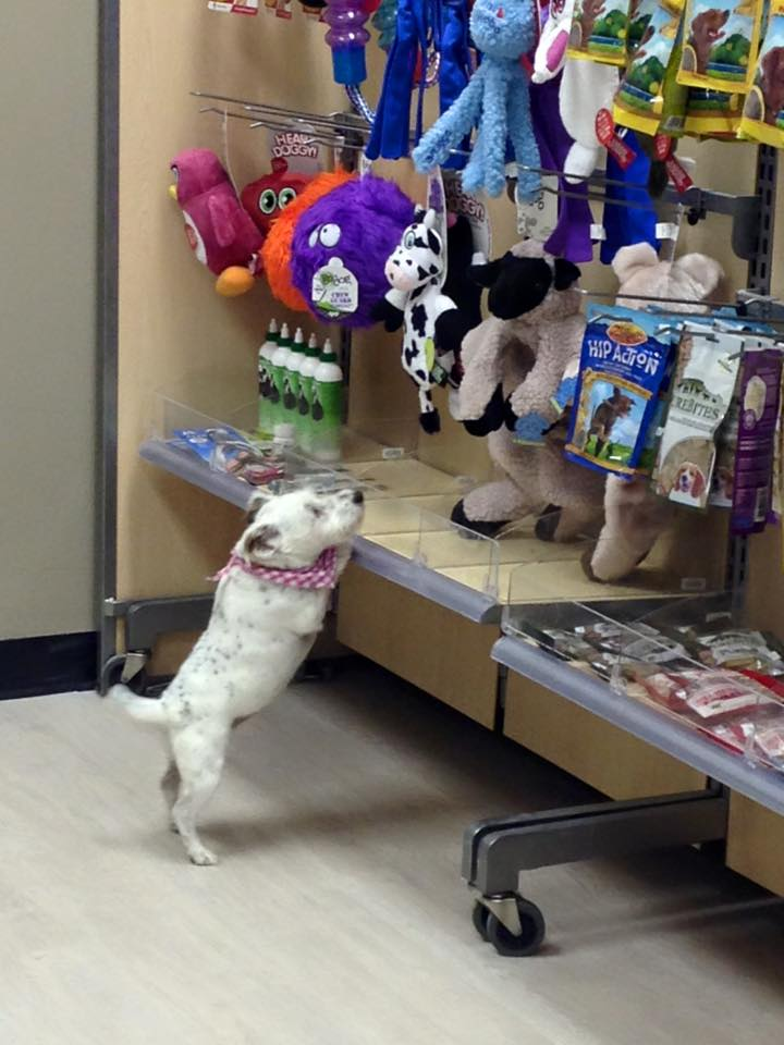 Ruby is enjoying his shopping experience at Wag Awhile