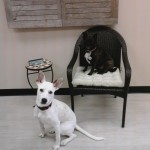 Molly and Callie pose for a photo shoot in the front office area