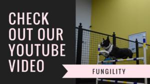 fungility youtube