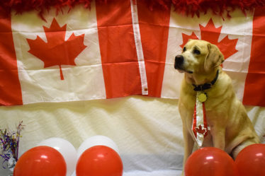 Canada Day picture