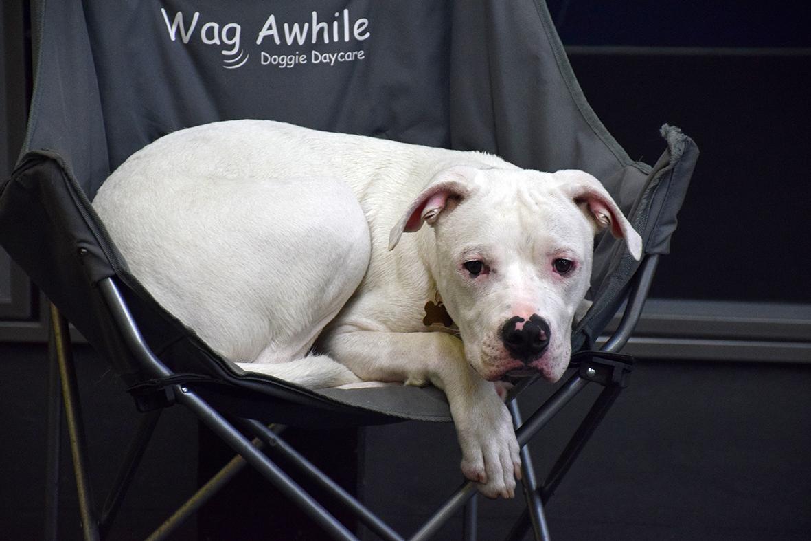 Dog Daycare Boarding, Dog Grooming Newmarket / Aurora -